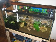 1000+ images about on Pinterest Dock ideas, Turtle tanks and Turtles