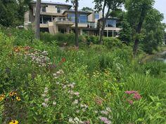 Wildlife, Natural, Garden, Plants, Garten, Lawn And Garden, Gardens, Plant, Gardening
