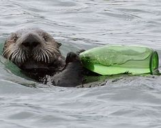 sea otter with green glass bottle