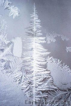 Ice Design by Steven Bourelle