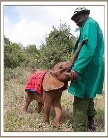 #Elephant #Mbegu #Africa #SaveElephants #Againstpoaching