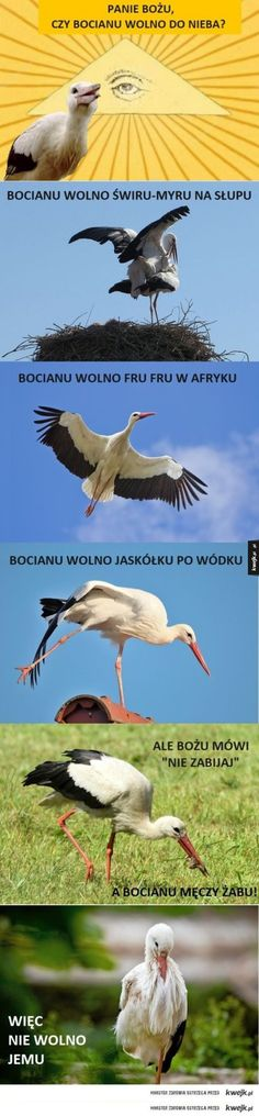 Panie Bożu, czy wolno im do nieba? Animals And Pets, Funny Animals, Cute Animals, Funny Mems, Fru Fru, Wtf Funny, Reaction Pictures, Man Humor, Animal Memes