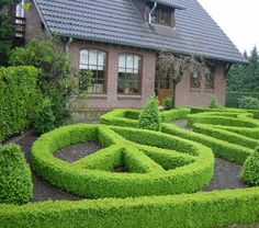 These shrubs were trimmed by an expert!  How neat!