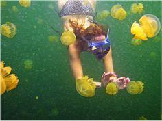 Swim with the jellyfish on Palau Island