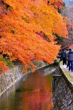 哲学の道 ~京都の紅葉 Path of Philosophy (Tetsugaku-no-Michi),Kyoto autumn, fall, season, seasons, leaves, red, the real japan, real japan, japan, japanese, guide, tips, resource, tips, tricks, information, guide, community, adventure, explore, trip, tour, vacation, holiday, planning, travel, tourist, tourism, backpack, hiking http://www.therealjapan.com/subscribe/