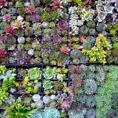 Really want succulent living walls in my garden