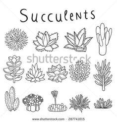 Hand drawn vector succulents
