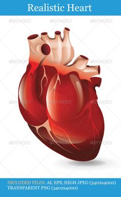 """Realistic Heart #GraphicRiver Includes: FOLDER: """"Realistic Heart – JPG"""" Contains: 3402×4000 JPG image. FOLDER: """"lRealistic Heart – PNG"""" Contains: 3402×4000 FOLDER: """"Realistic Heart – EPS"""" Contains: fully editable Vector Object EPS. Minimum Adobe Illustrator CS Version – CS10. FOLDER: """"Realistic Heart – AI"""" Contains: fully editable AI file. Minimum Adobe Illustrator CS Version – CS10. The image is made up entirely of vector shapes so you may resize to whatever size you need. Created: 22June13…"""