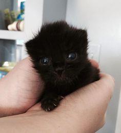 So tiny