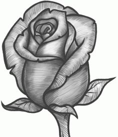 How to Sketch a Rose