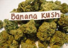 Looking to Buy weed online, Hash oil, Marijuana Hashish, Marijuana Concentrates, cannabis pheonix tears oil and pre rolls and have it delivered to your door ? Regardless of whether you live in a state OR country where marijuana is legalized or not. Buy Cannabis Online, Buy Weed Online, Weed Strains, Weed Types, Cbd Oil For Sale, Smoking Weed, Medical Marijuana, Seeds, Men Stuff
