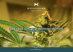 It is our pleasure to present you two new hemp-strains, which exhibit no psycho-active effects. This is ensured by a high cannabidiol (CBD) content with only trace amounts of tetrahydrocannabinol (Δ9-THC <0.8%). As pioneers regarding the introduction of medicinal cannabis into medical therapies, it is our main focus to guarantee an uncomplicated and reliable treatment to patients suffering from various afflictions. #thc #medicalcannabis #cannabidiol #cbd #marijuana #medicalmarijuana Cbd Hemp Oil, Cannabis Plant, Oil Benefits, Medical Cannabis, Exhibit, Seeds, Science, Content, Medicine