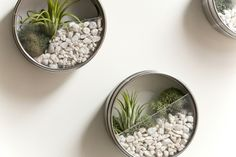 magnetic tins turned mini zen airplane garden. This would in an office cubicle or office.