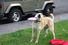 Mis 33 fotos favoritas de perros de Internet