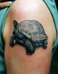 Tattoo Tortoise                                                                                                                                                                                 More
