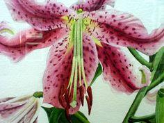 Rubrum                   Lilies detail