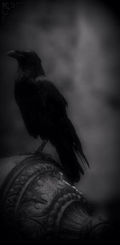 Crows have more than 20 calls.  You may also hear a variety of calls  American…