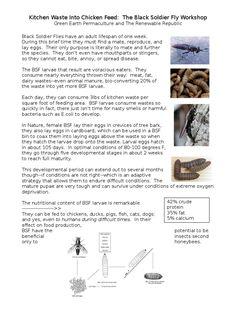 I'm reading Black Soldier Fly Bin Workshop on Scribd