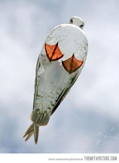 Funny pictures about A seagull on the glass roof. Oh, and cool pics about A seagull on the glass roof. Also, A seagull on the glass roof photos. Love Birds, Beautiful Birds, Animals Beautiful, Foto One, Funny Bird, Funny Animals, Cute Animals, Glass Roof, Glass Ceiling