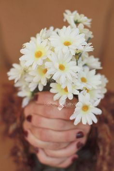 Daisies need no formal introduction.Nor do they need a crystal vase.Daisies are, to me, well, a flower that gives simply, straight to the heart with smiles~