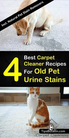 4 Best Carpet Cleaner Recipes for Old Pet Urine Stains - #Carpet #cleaner #Pet #Recipes #Stains #Urine