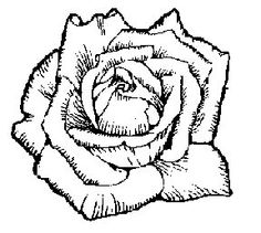 Embroidery Designs Greek Letters Embroidery Patterns For Sale Flower Coloring Sheets, Printable Flower Coloring Pages, Coloring Pages For Kids, Tulips Images, Flower Images, Hand Embroidery Patterns Free, Embroidery Designs, Flower Canvas, Flower Art