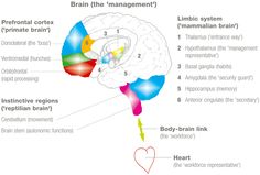 Neuroscience of Emotional Intelligence - Foresightcd Feelings And Emotions, Thoughts And Feelings, Brain Anatomy And Function, Basal Ganglia, Neuroscience, Emotional Intelligence, Self Help, Helping People, Leadership