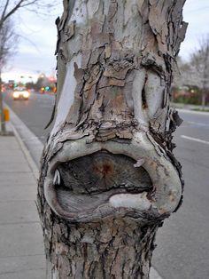 cartoon tree face | photo by Tomek Mackowiak on flickr