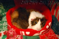 Cali Cavy Collective: a blog about all things guinea pig: Secrets of Fleece Bedding for Guinea Pigs Revealed - Part II, Selection and Preparation