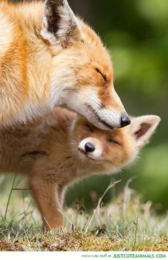 40 Fox Pictures Will Make You Fall In Love with Them - Tail and Fur