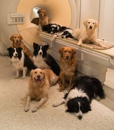 Dogs turn to humans as family members more than other dogs. Scientists found…