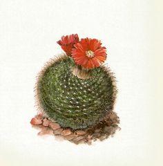 Gorgeous ANTIQUE CACTUS PRINT Red Flowered Cactus Vintage 1971 Botanical Print Flower Wall Art Home Decor (Cacti 29)
