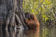 Face to face in a river in Borneo by Jayaprakash Joghee Bojan