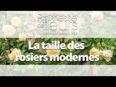 Promesse de Fleurs - YouTube Comment Planter, Planters, Gardening, Gardens, Rose Trees, Shrubs, Travertine, Floral, Potager Garden