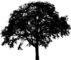 Find images of Tree Silhouette. ✓ Free for commercial use ✓ No attribution required ✓ High quality images. Landscape Silhouette, Silhouette Images, Tree Silhouette, Silhouette Vector, Black And White Tree, Black And White Drawing, Tree Images, One Tree, Silhouette Cameo Projects