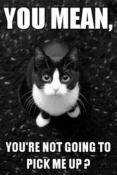 26 Best Cat Memes Created By Me Images Cat Memes Cats Kittens