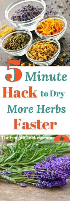 Got an over abundance of herbs and not a lot of space to dry them? Try this 5 minute hack we tested! You'll love it!