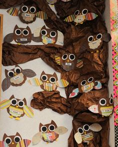 owl bulletin board ideas | habitats unit owl facts under chest feathers repinned from owl ...
