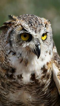 Birds of Prey - Eagle Owl - by Suju
