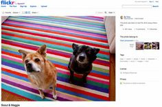 Is bigger better Pet Trailer, Web Social, High Resolution Images, Beach Mat, Corgi, Outdoor Blanket, Bring It On, Product Launch, Kids Rugs
