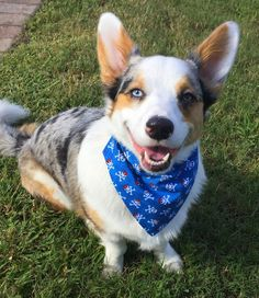 Dog over-the collar style bandana in two by PuppyPawzBoutique