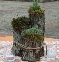 troncs d'arbre en tant que vases avec des arrangements de plantes succulentes