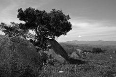 Zé Cruz: Fotografia de natureza e vida selvagem. Minha meta é retratar a beleza da paisagem, flora e fauna da região do Vale do Paraiba. A Serra da Mantiqueira e a Serra da Bocânia são meus temas principais, assim como o fundo do vale e o Vale Histórico com suas belezas naturais