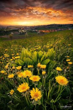 Photograph Spring Hot Mood - Santuario di Vicoforte - Cuneo Piemonte Italy by Paolo Lombardi on Beautiful Artwork, Beautiful Images, Composition Photo, Felder, Beautiful Sunrise, Ciel, Amazing Nature, Nature Photos, Pretty Pictures