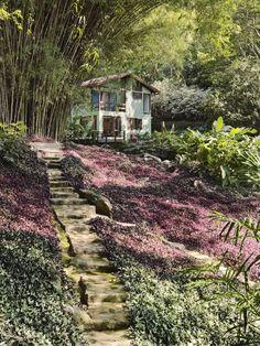 Jardim para três casas com espécies tropicais - Casa | Caminhos feitos de pedra local, terra e cimento percorrem bambuzais e ladeiam forrações de diferentes espécies. Projeto de Tania Manela Kurc.