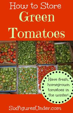 How to store green tomatoes so you can have fresh, homegrown tomatoes in the winter!  | SixFiguresUnder.com