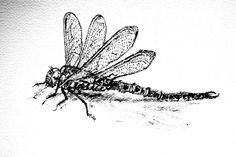Dragonfly Drawing Template