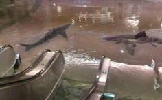 An image of a flooded shopping center has been photoshopped with sharks to make Internet users think it's real.
