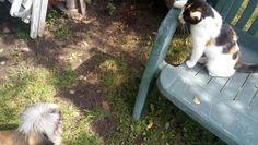 przyjaciele z podwórka