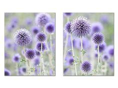 Purple Flower Print Set, Purple Thistle Flower, Floral Art, Flower Wall Gallery, Lavender Wall Decor, Purple Wall Art, Cottage Chic Decor